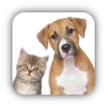 Hund & Katz